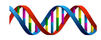 DNA? Or Actual and Ideal